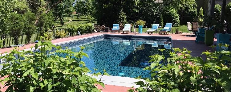 pool.plants.jpg