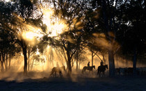 Gallop Through the Night
