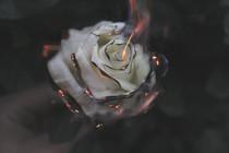 Watch the World Burn// Melting Wax (2 poems)