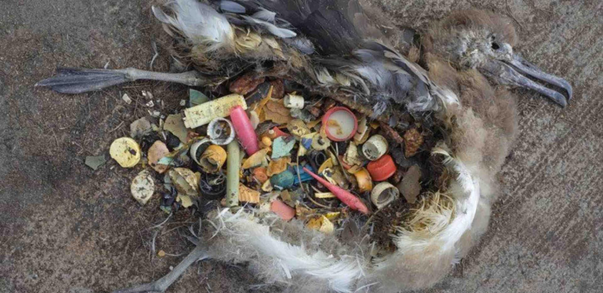 Plastične ptice