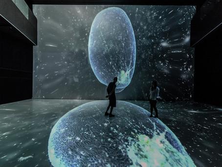 I buka zagađuje mora i oceane:  otvorenje izložbe NOISE AQUARIUM u Puli