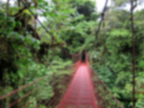 Monteverde_puente.jpg