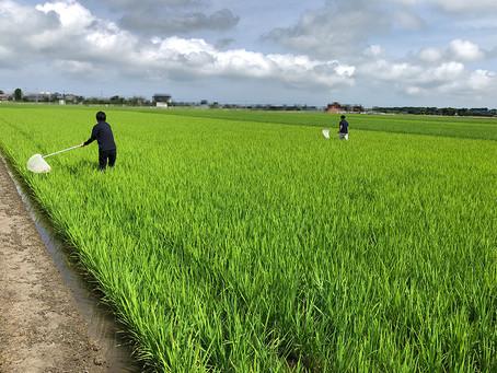 水稲用農薬試験調査