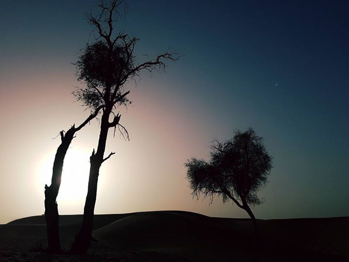 I love this picture I took of the desert at dusk