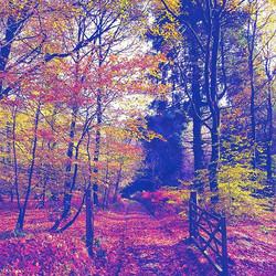 Autumnal Walks