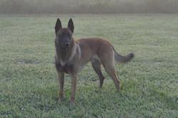Max in Fog 8-217-17
