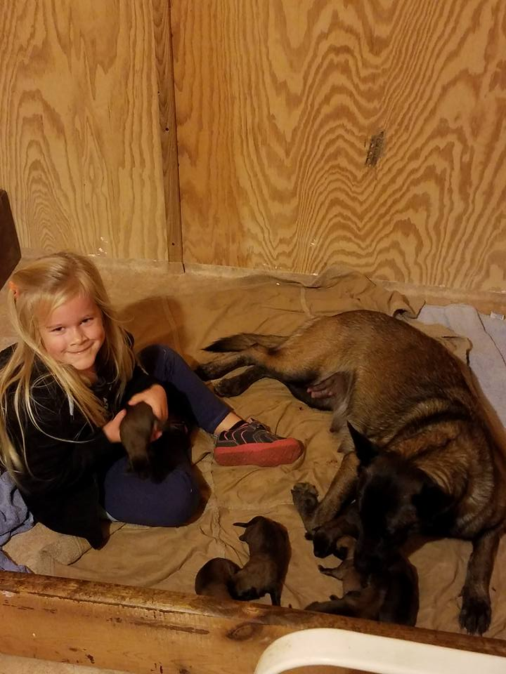 four year old with Belgian Malinois