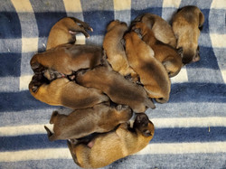 A Puppies day 4