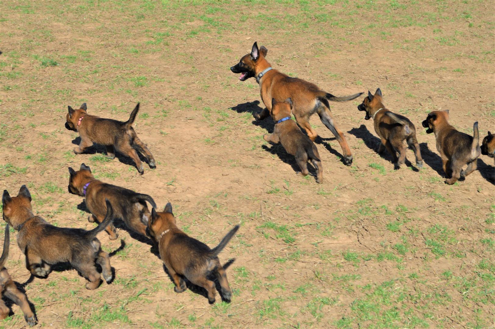 Grace pups running 3-28-2020.JPG