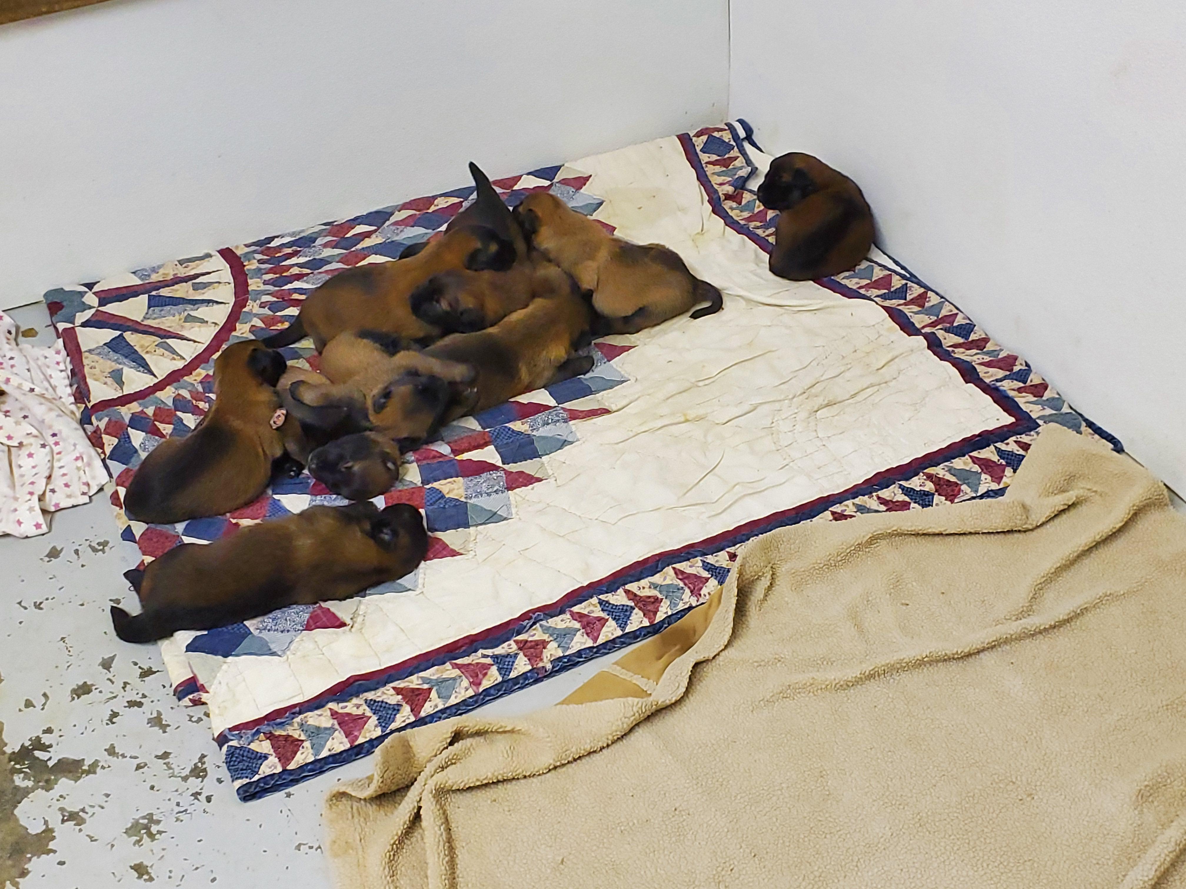 alex pups day 18x4