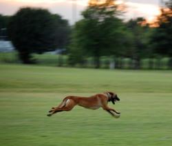 Roxy in Flight