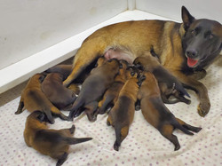 Alex and pups 12 days old x2