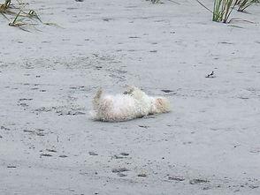 Pookie in the sand.jpg