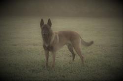 Max fog pose 8-27-17