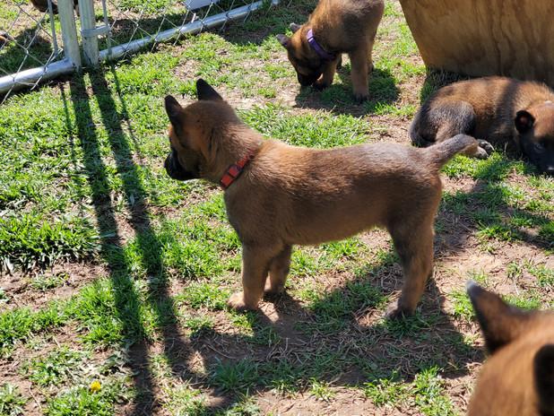 Grace pups 3-25-202 x2.jpg