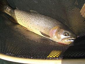 Fish in the net.jpg