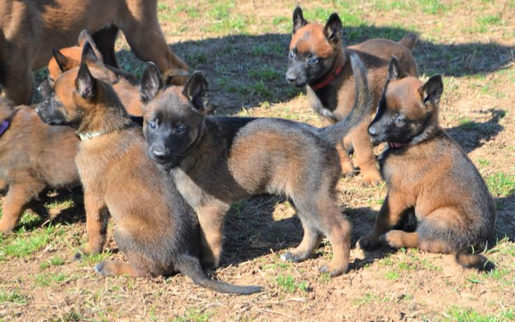 Grace pups crowding.JPG