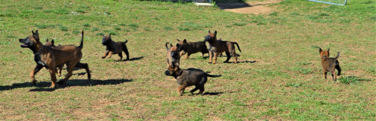 Grace pups run 3-28-2020.JPG