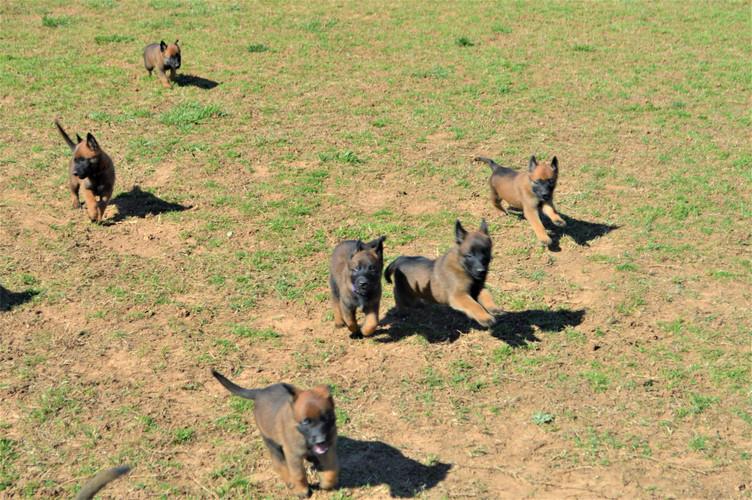 Grace pups a running.JPG