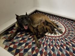 alex and pups