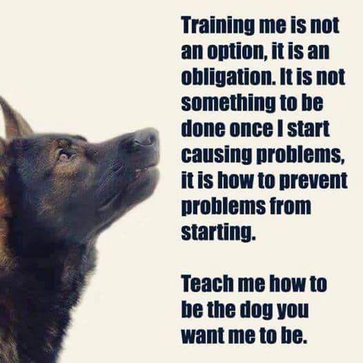 Training an obligation.jpg