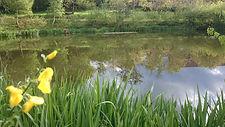 L'étang.JPG