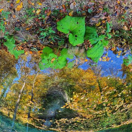 Wasser | Spiegel