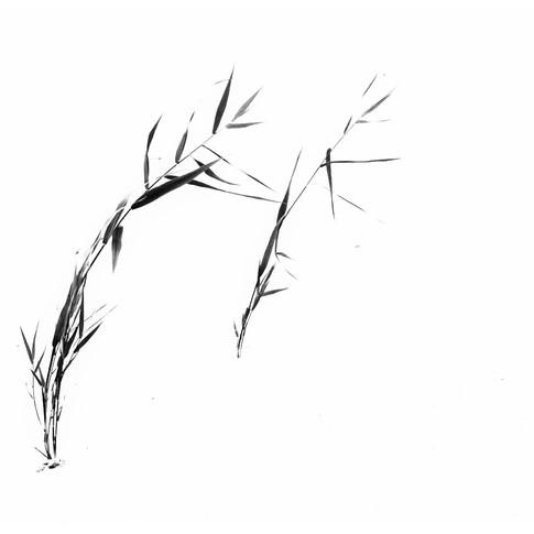 Wie mit Tusche gezeichnet
