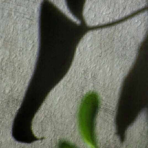Schattenblatt
