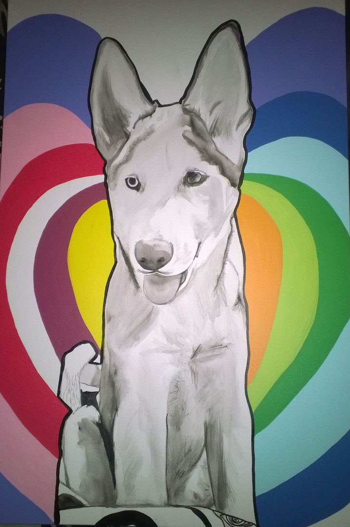 Husky Portrait With Colour background