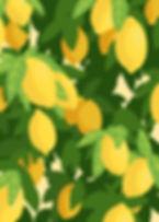 lemon illust.jpg