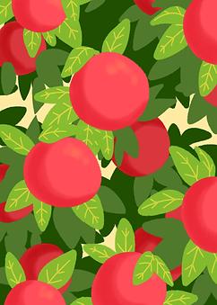 grapefruit illust.png