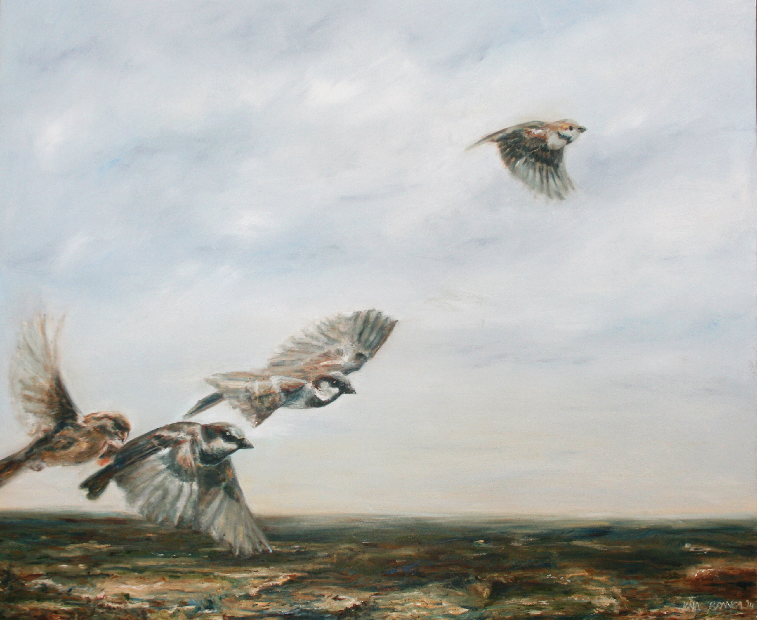 Sparrows in flight 2