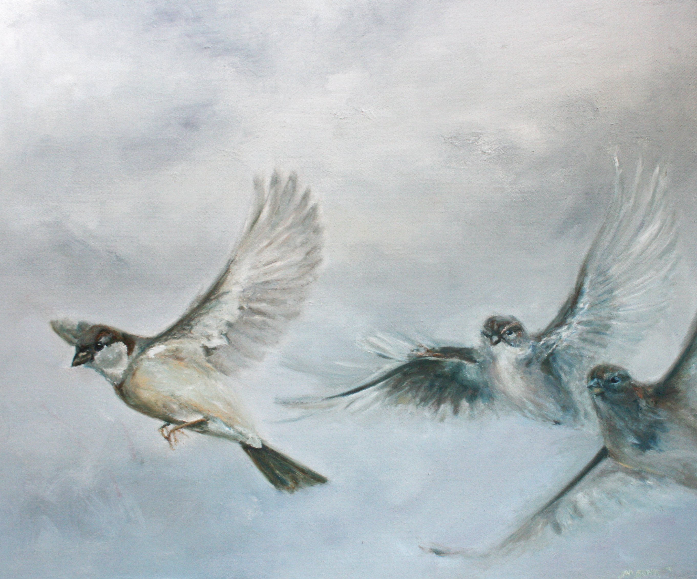 Sparrows in flight 1