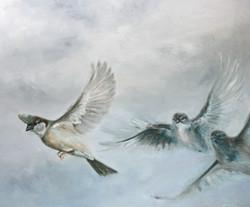 Sparrows in flight 1
