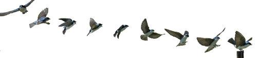 bird_approach_land.jpg