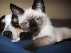 3 Things Pet Owners Need to Know About Finding Quality Overnight Care