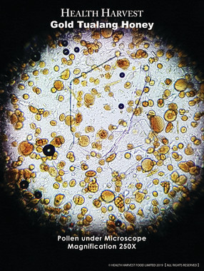 Pollen of Tualang Honey under Microscope 顯微鏡下Tualang蜂蜜花粉
