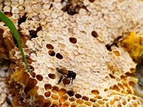 蜂蜜會變壞嗎?