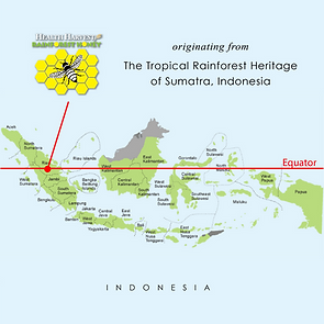 The Tropical Rainforest Heritage of Sumatra by Health Harvest Tualang Honey Specialty