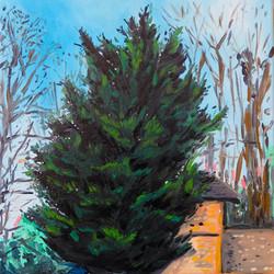 Le sapin du château. Huile sur toile, 30 x 30 cm, 2020.