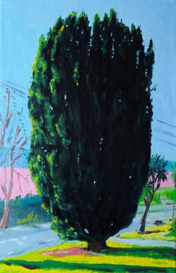 Le cyprès huile sur toile 27 x 40 cm 2020