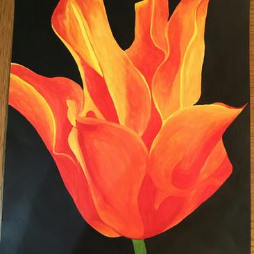 Calypso tulip