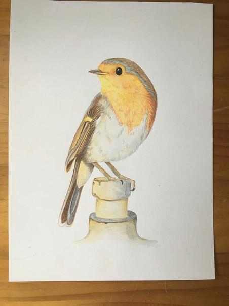 Beloved robin