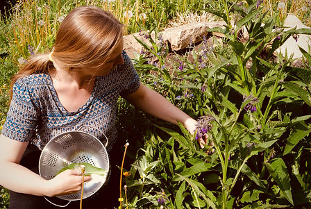 Profile of beautiful woman foraging comfrey leaves