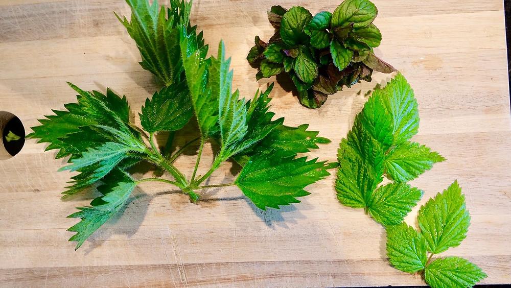 Stinging nettle leaves, peppermint leaves, rasberry leaves