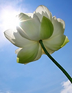 flower in sun.png
