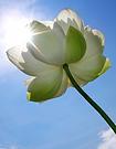 flower in sun.png