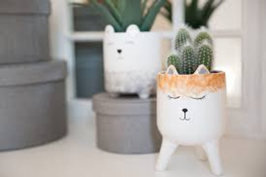 Little Fox Face Planter