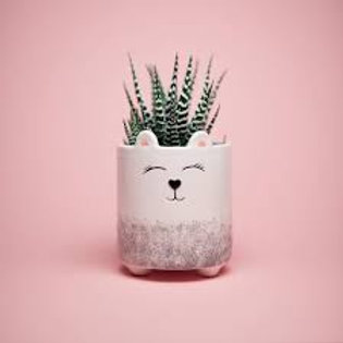 Little Bear Face Planter